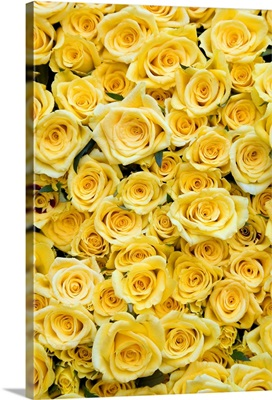 Netherlands, North Holland, Amsterdam, Yellow roses for sale at Albert Cuypmarkt
