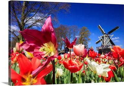 Netherlands, South Holland, Benelux, Lisse, Keukenhof Tulip Gardens Near Amsterdam