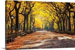 New York New York City Central Park Tree Lined Walk