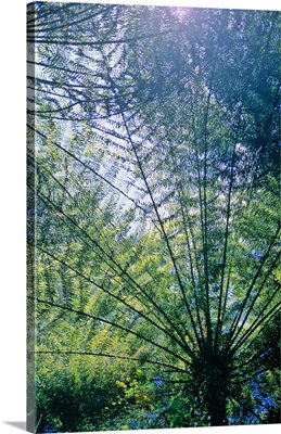 New Zealand, South Island, Abel Tasman National Park, ferns