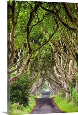 Northern Ireland, Antrim, Dark Hedges