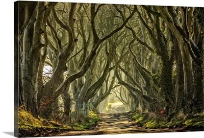 Northern Ireland, Great Britain, Ballymoney, Dark Hedges