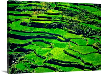 Philippines, Luzon, Barangay, Rice terraces near Barangay