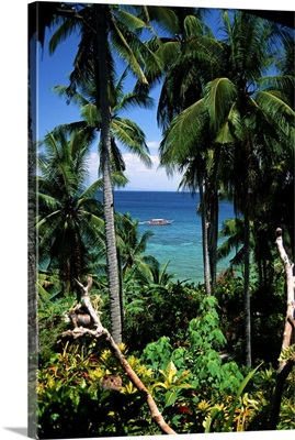 Philippines, Tropical plants