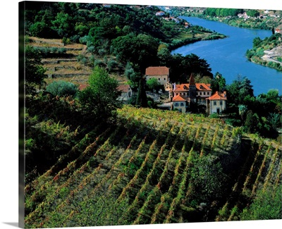 Portugal, Douro Valley, Douro river, vineyards nearby Regua
