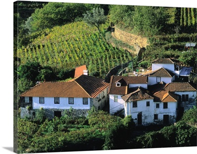 Portugal, Douro Valley, vineyards nearby Resende