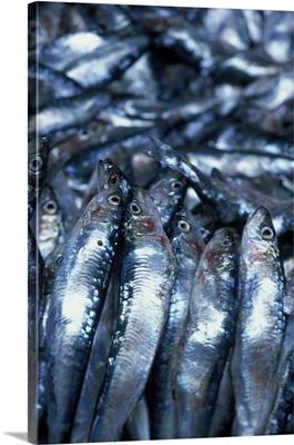 Portugal, Estremadura, Nazare village, fresh sardines