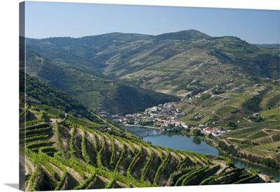 Portugal, Vila Real, Tras-os-Montes e Alto Douro, the Douro valley, vineyards
