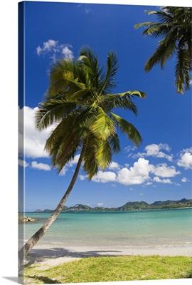Saint Lucia, Castries, Caribbean, Caribbean sea, Palm trees in Vigie Beach