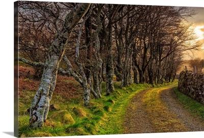 Scotland, Inner Hebrides, Isle of Skye, Trees near Neist Point