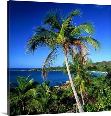Seychelles, Praslin, Anse Lazio, bay