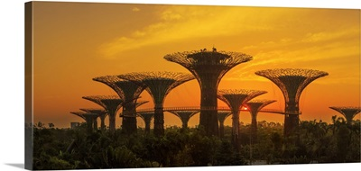 Singapore City, Gardens by the Bay trees at sunrise