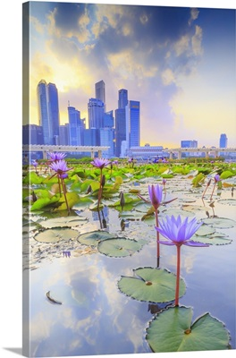 Singapore City, Water lilies and city skyline at sunset