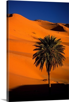 Single tree and dunes