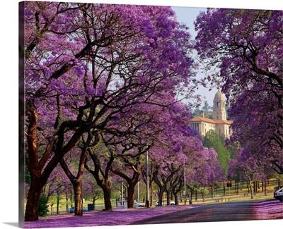 South Africa, Gauteng, Pretoria, Union Building and Jacaranda trees
