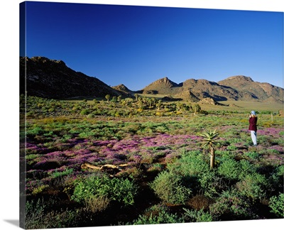 South Africa, Namaqualand, Goegap Nature Reseve, wild flowers