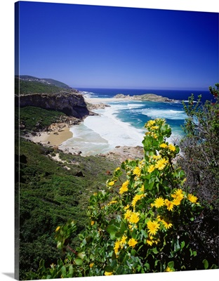 South Africa, Western Cape, Garden Route region, Robberg nature reserve