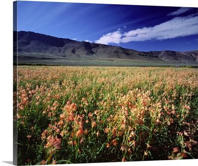 South Africa, Western Cape, Little Karoo plateau, Exenriver Mounts