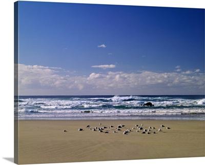 South Africa, Western Cape Province, Noetzie Beach near Knysna town