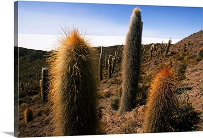South Ameica, Bolivia, Salar de Uyuni desert, Isla del Pescado