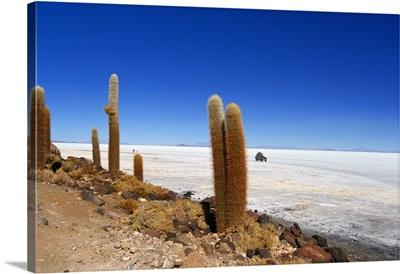 South America, Bolivia, Salar de Uyuni desert, Isla del Pescado