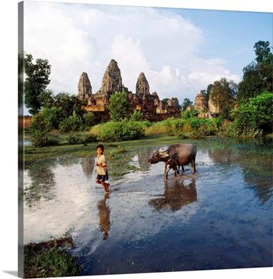 Southeast Asia, Cambodia, Kampuchea, Angkor, Pre Rup Temple, rice paddy