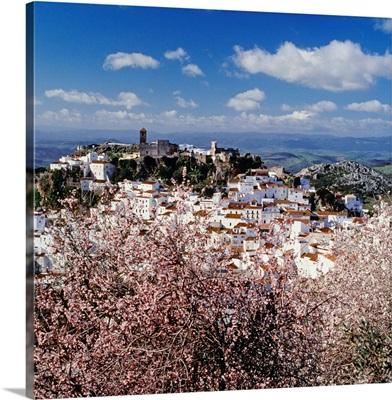Spain, Andalusia, Casares, Pueblos Blancos, Casares town, almond trees