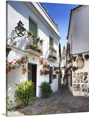 Spain, Andalusia, Mediterranean area, Cordoba district, Cordoba, Calle de las Flores