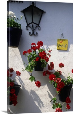 Spain, Andalusia, Mediterranean area, Cordoba, flowers on a patio