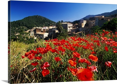 Spain, Balearic Islands, Poppies with the village in the background