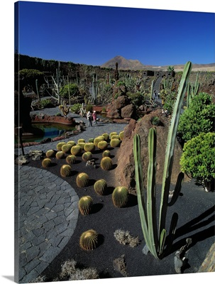 Spain, Canary Islands, Guatiza, the Cactus Garden created, Cesar Manrique artist