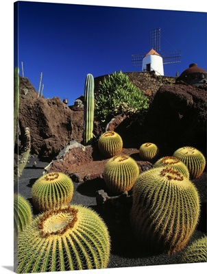 Spain, Canary Islands, Lanzarote, Guatiza, the Cactus Garden created by Cesar Manrique