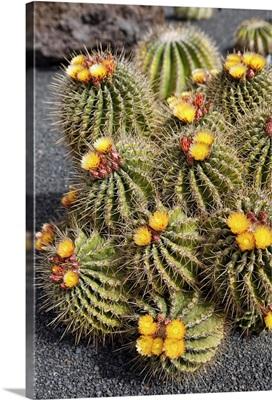 Spain, Canary Islands, Lanzarote, Jardin de Cactus created by Cesar Manrique
