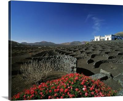 Spain, Canary Islands, Lanzarote, La Geria, vineyards
