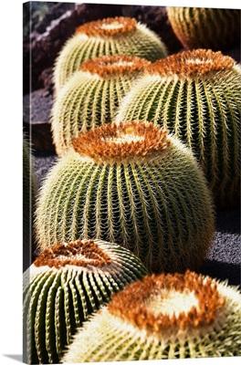 Spain, Canary Islands, Lanzarote, Las Palmas district, Cesar Manrique cactus garden