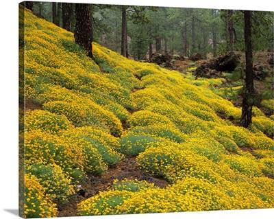 Spain, Canary Islands, Tenerife, flowers