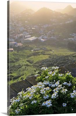 Spain, Canary Islands, Tenerife, Parque Rural de Anaga, mirador de Las Mercedes