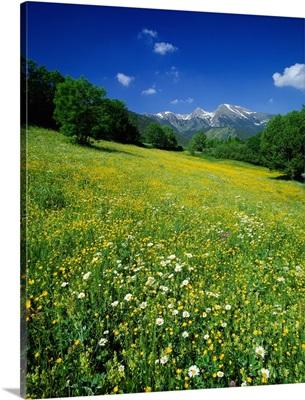 Spain, Catalonia, Parque Nacional d' Aigues Tortes i Estany de Sant Maurici