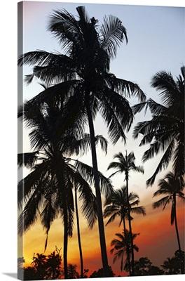 Sri Lanka, Eastern Province, Nilaveli, Palm trees at sunset