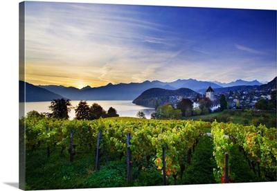 Switzerland, Bern, Berner Oberland, Lake Thun, Spiez, medieval castle and vineyards