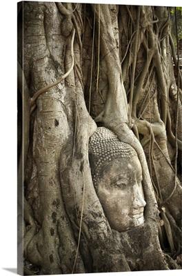 Thailand, Ayutthaya, Buddha head embedded in tree roots, Wat Mahathat