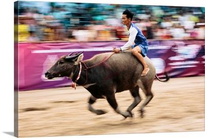 Thailand, Changwat, Buffalo rider at the finish line, Chuonburi Buffalo Racing Stadium