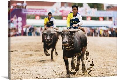 Thailand, Changwat, Buffalo Riders, Chuonburi Buffalo Racing Stadium