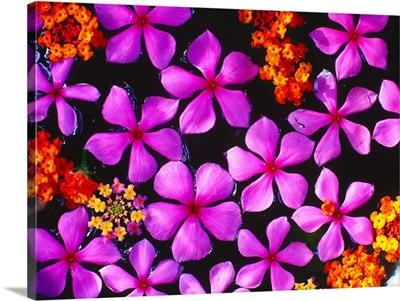 Tropical flowers in water
