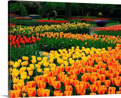 Tulip field, Holland, Keukenhof
