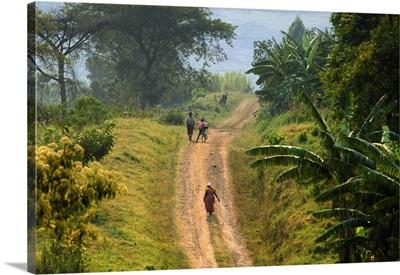 Uganda, Bunyarugura area