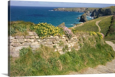 UK, England, Cornwall, Bedruthan Steps and wildflowers on the South West Coast Path