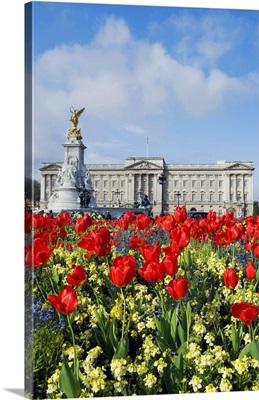UK, England, London, Buckingham Palace, Red tulips