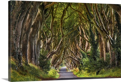 UK, Northern Ireland, Great Britain, Antrim, Dark Hedges