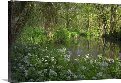United Kingdom, England, Cornwall, stream on Bodmin Moor